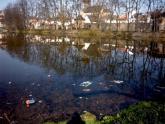 14. Poličský park a Synský rybník